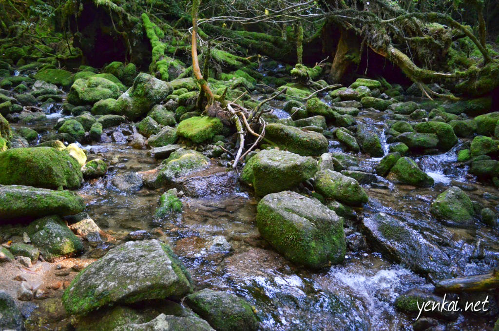 Travel bucket list: Yakushima
