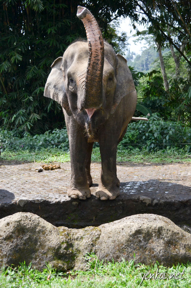 To see an elephant raise its trunks and grin at you is a wonderful way to start the Safari visit