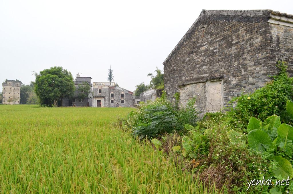 Growing rice is the main economic activity here